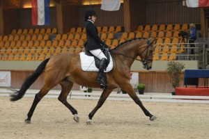 Para-Equestrian Sets Sights on Gold in 2014