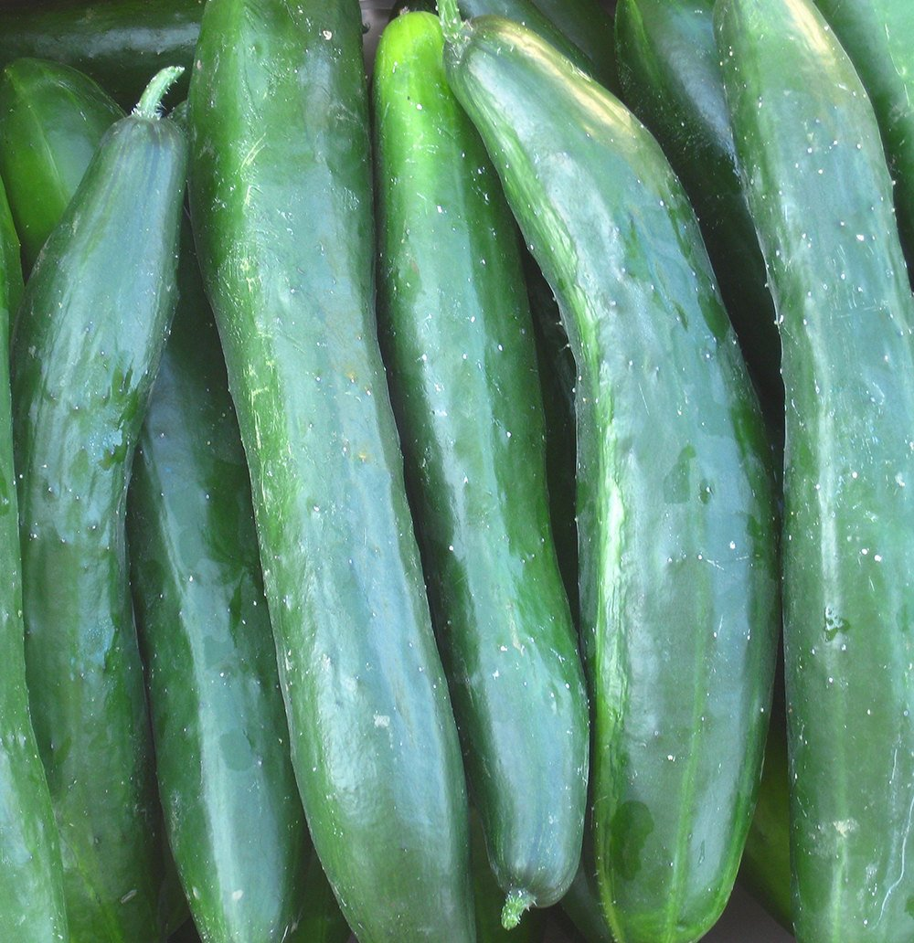 'Shintokiwa' Cucumber
