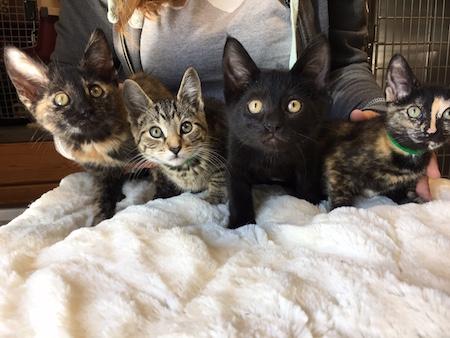 Kittens - Meet us at South Ridge Animal Clinic!